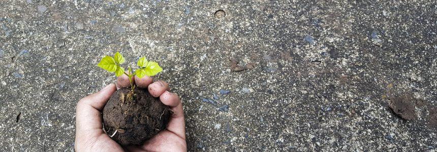 Il cemento e la bioarchitettura