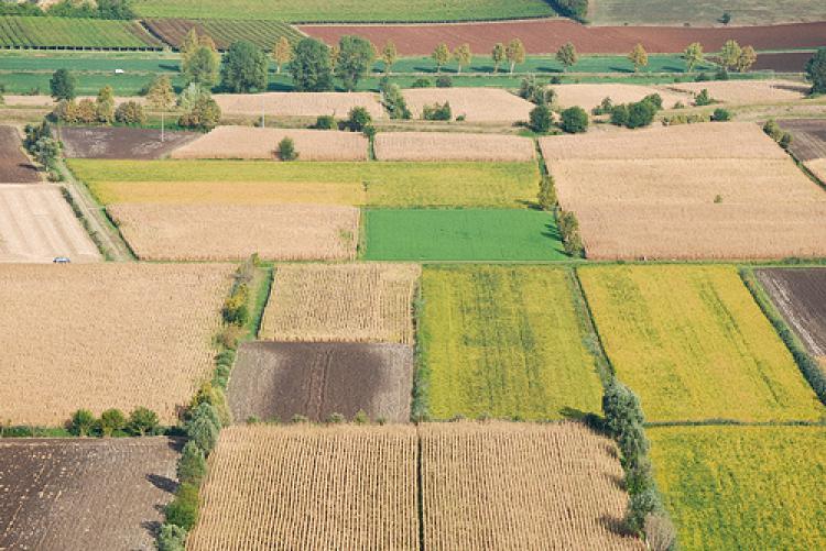 Differenza tra reddito agrario e reddito dominicale