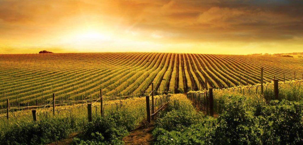 Rendita catastale e valore catastale di un terreno agricolo