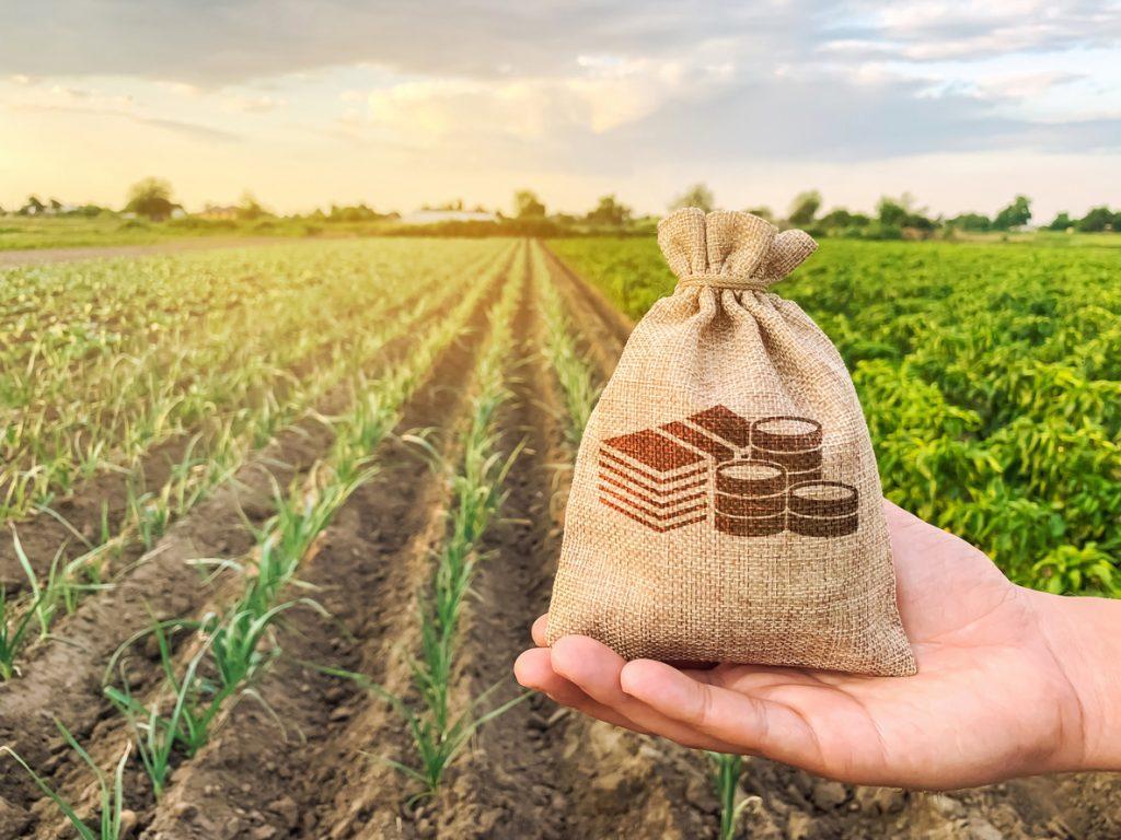 Rendita catastale per terreni agricoli: ecco come calcolarla